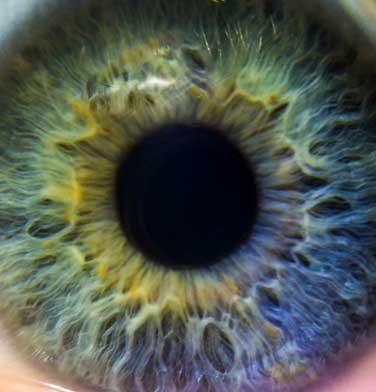 iridologia gijon
